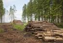 Котельные предприятий Омского лесопромышленного кластера планируют перевести на биотопливо