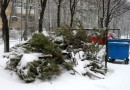 В Московской области планируют перерабатывать новогодние елки в биотопливо