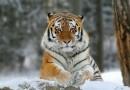 Утвержден план сохранения редких животных и растений на 16 лет