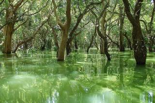 К борьбе с контрабандой ценных пород дерева, в Таиланде призвали высшие силы