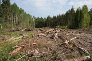 Всемирная лесная вахта будет отслеживать незаконную вырубку лесов через Интернет