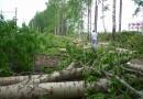 Массовую вырубку деревьев в Минске прокуратура признала законной