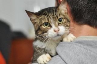 Учеными доказано, что кошки продлевают жизнь своих хозяев