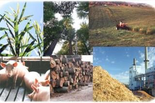 Великобритания обладает потенциалом для масштабного роста рынка биоэнергетики