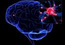 В Австралии будет создан бионический мозг