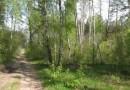 В Челябинске выявили незаконное выделение земельных участков на территории памятника природы «Ужевский бор»