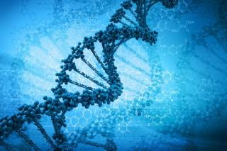 Генетики создали искусственную хромосому