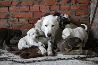 Резонансный законопроект об обращении с бродячими животными в Приморье, приняли в первом чтении