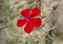 В Западной Сибири появились десятки новых растений