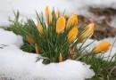 Глобальное потепление вынудило весну приходить раньше