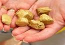 Разработка золотоносного месторождения «Новые пески» начнется уже в текущем году