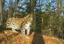 Пожар в нацпарке «Земля леопарда» удалось потушить