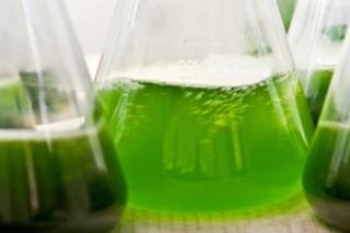 В Калининграде научились из отходов делать биотопливо и стройматериалы