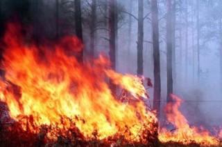 Лесные пожары в Приморье