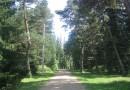 В Новокузнецке запланирован новый дендропарк