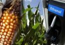 Чистое биотопливо из кукурузы