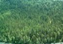 Вопреки мнению, деревообработка — не главная причина обеднения лесных ресурсов