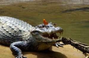 Рептилии тоже плачут