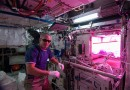 На МКС высадили первые семена красного салата