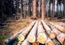 В Белгороде организатора митинга в защиту леса от вырубки оштрафовали за лишние 9 минут