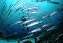 Сможет ли рыба спасти нашу планету?