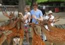 Город Нара и его олени