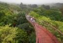 Высотная прогулочная дорожка в ботаническом саду