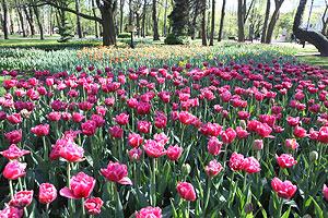 Общественные организации Минска станут «опекунами» городских парков