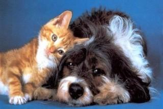 Ученые нашли гормон, ответственный за привязанность животных к человеку