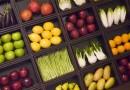 В Наро-Фоминске проходит вегетарианский фестиваль