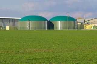 Для производства биогаза украинские торфяники засадят вербой