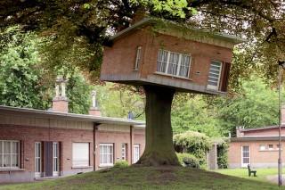 Дом, который влез на дерево