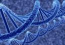 Ученые открыли гены, влияющие на интеллект