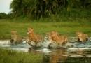 В WWF рассказали о катастрофическом снижении числа диких животных