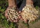 Котельные Няндомы переводят на отходы деревообработки