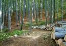 Взаимосвязь между вырубкой леса и сертификатом – FSC