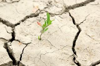 В Петербурге масштабно отметили Всемирный день почв