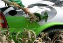 В Индии рассматривают биомассу в качестве альтернативы нефти