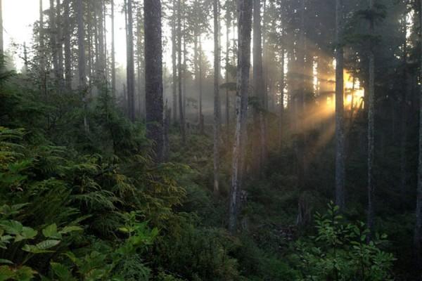 Экодом в чаще леса