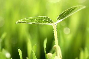 Будущей весной в Краснодаре пройдет олимпиада «Экология и техносферная безопасность»