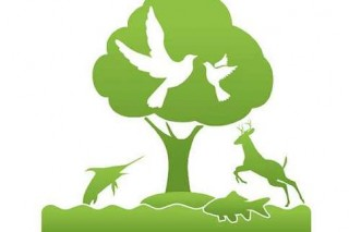 В Новополоцке проходит конкурс детских рисунков экологической тематики