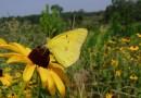Основные понятия о горячих точках биоразнообразия