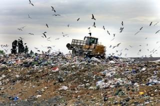 Немцы построят в Подмосковье завод по переработке пищевых отходов