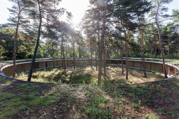 Хостел вокруг соснового леса