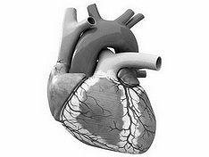Американские медики напечатали на 3D-принтере полнофункциональные миниатюры человеческих органов