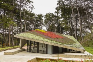 Цветочные клумбы в качестве крыши
