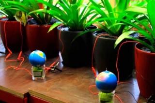 В Чили научились заряжать смартфоны от домашних растений