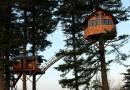 The Cinder Cone: два дома на трех соснах