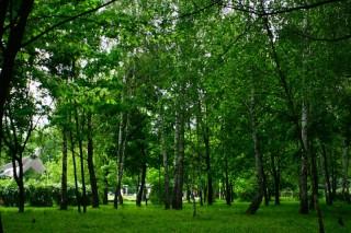 В первом полугодии в Подмосковье собрали 24 миллиона рублей «экологических» штрафов