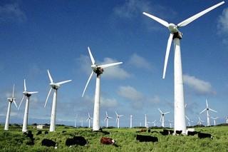 В Дании за один день с помощью ветра выработали электричества больше, чем требуется стране